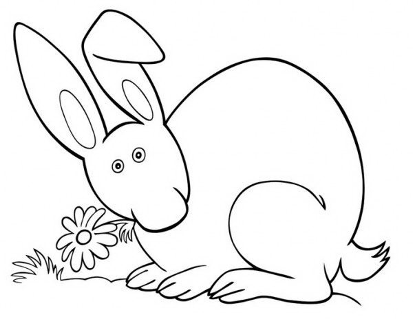 ארנב מקסים לצביעה