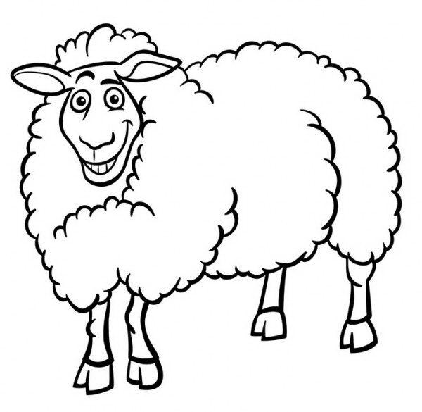 Line Drawing Of Domestic Animals : דף צביעה של כבשה מחייכת