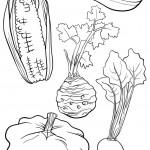 מגוון ירקות לצביעה