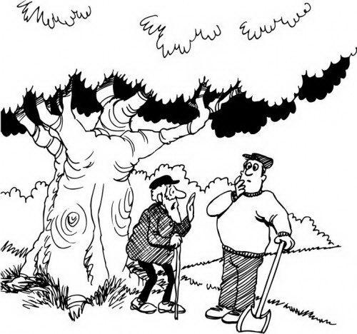 """זה העץ שנטעתי בט""""ו בשבט !"""