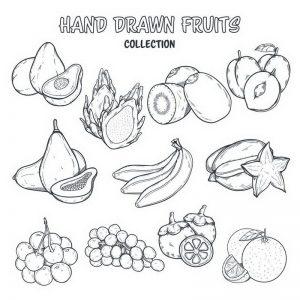 ציורים של פירות לצביעה